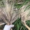 麦から考える多様性のメリットデメリット