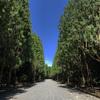 炎天下の桃山御陵を散歩