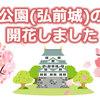 弘前公園(弘前城)の桜も開花しました 満開は4月19日予想 2021年