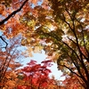 笹流れダムの紅葉…