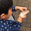 桜の花びらを集める息子