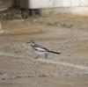 浜で野鳥撮影