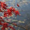 本宮市・蛇の鼻庭園で紅葉の道を散策してきました【福島の紅葉スポット】