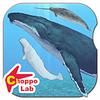 世界のクジラとイルカを収集しよう!世界のクジラとイルカ図鑑