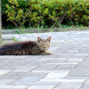 今日の景色 06/17 猫たち