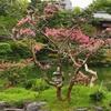 【京都観光】京都にも厳島神社があるのをご存知ですか? (^^
