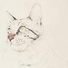 色鉛筆で猫、続編です
