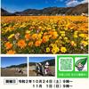 24日(土)から西伊豆の松崎で田んぼをつかった花畑 種まきイベントが開催されます