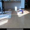 移動する犬