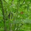 疎林の草原で - キマダラモドキ -