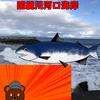 道南(北海道)鮭(アキアジ)釣場案内【国縫川河口海岸】