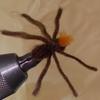100均素材でspider(蜘蛛)をフライタイイングpart2