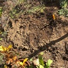 生ゴミ堆肥化・実験その8 2つ目の穴終了。