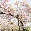 3/11『目をいたわるハーブ温湿布体験&アルガン美容オイル講座@くらりす・萩山』