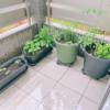 【緑のある暮らし】ベランダ菜園とお弁当の記録