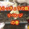 島らっきょうの栽培リベンジ! ~ガジェットとかミョウガール 20~