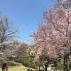 春の上田放浪記