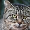 迫力のある猫さま2021