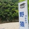 十津川村 野猿(西川出合)
