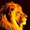 王の目覚め