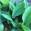 春の花が咲き終わり緑が主役になる