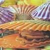緋扇貝(ひおうぎがい)