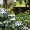 【鎌倉いいね】鎌倉らしい浄智寺を紹介してくれたBS番組「百年名家」に感謝。