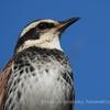 冬の代々木公園での野鳥観察