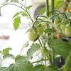 【初心者】家庭菜園で、節約始めました。使いやすい家庭菜園グッズ紹介も!