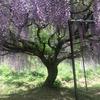 関西で有名な藤棚
