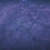 神の桜動画