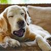 パヴロフの犬