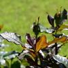 バラ開花まであと少し。。その後、5月の仙台市野草園 1