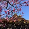 春が来てる!~北野天満宮梅祭り~