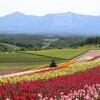 霧と花の北海道横断旅(6)
