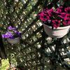 庭いじりとメダカちゃんと、とある来訪者…【おうち時間GW day1】