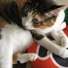 【愛猫日記】毎日アンヌさん#52