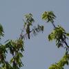 ジィちゃんと探鳥、北本公園・葛西臨海公園の野鳥。