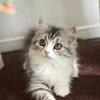 #男性を翻弄する小悪魔的色気フェイスの猫メイク
