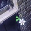 【さいたま国際芸術祭】須田悦弘のクレマチス