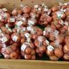 完熟トマトがいっぱい!