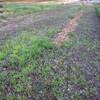 長畝の除草