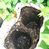 保温に使っていた木チップ後の空間