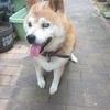 愛犬りょう 5