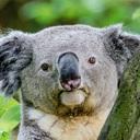 コアラさんのブログ
