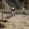 関むぎパッションフルーツ畑の肥料撒きがはじまりました!