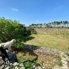 ヤギのいる沈砂池(仮称)(沖縄県与那国島)