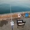 今年初めての釣り_残念ながら釣果ほぼ無し…
