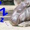 睡眠不足による影響