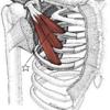 【論文考察】『ストレッチングによる小胸筋の即時的な柔軟性変化が肩甲骨運動に与える影響』を水泳に活かす